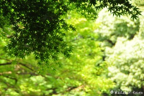 和田堀公園 084