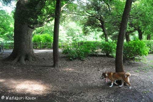 和田堀公園 057