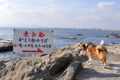 江ノ島 393
