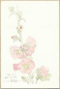 葵の花(1)
