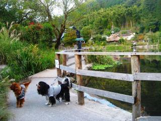 091012120金鱗湖