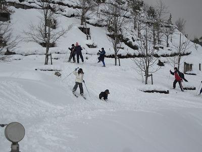 Walking ski 3
