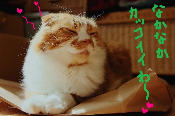 (11)_20111223232300.jpg