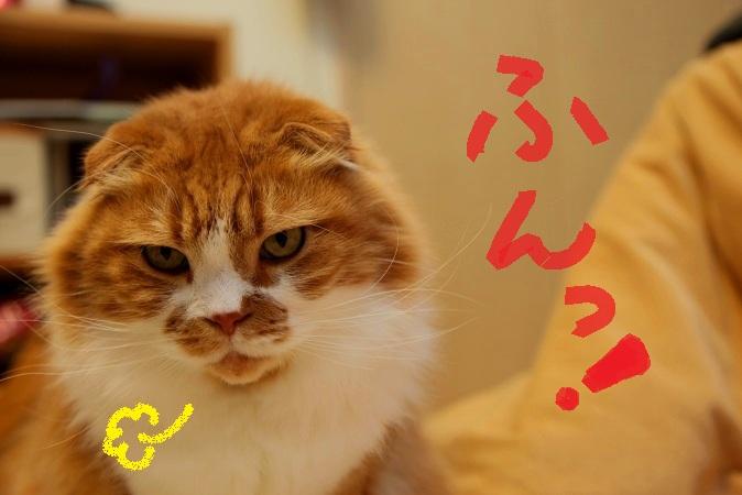 (3)_20120119050859.jpg