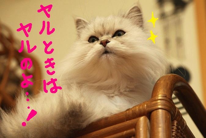 (4)_20120220162206.jpg