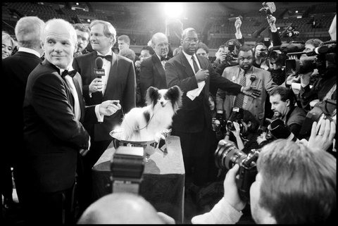 _elliott Erwitt showdog