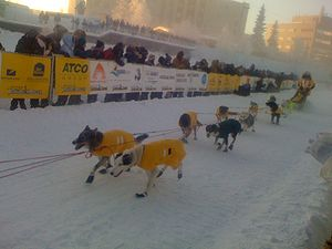 300px-2008_Yukon_Quest_start.jpg
