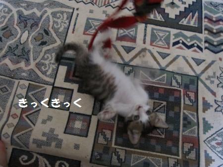 IMG_1429_convert_20100809164315.jpg