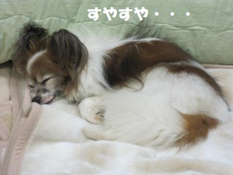 _Gotenchan3_20110507212741.jpg