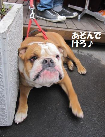 _Hachibeikun_20110410102148.jpg