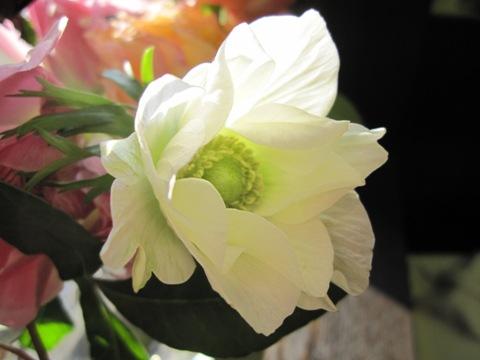 _flower.jpg