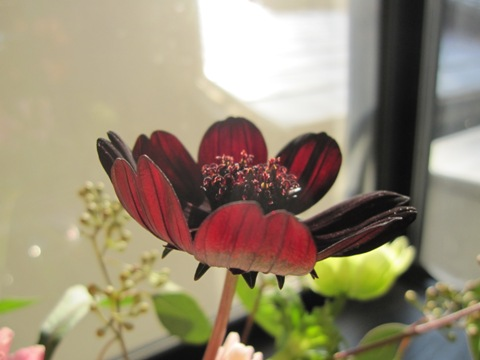 _flower2.jpg