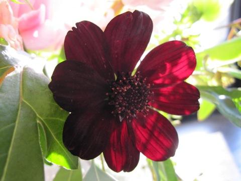_flower3.jpg