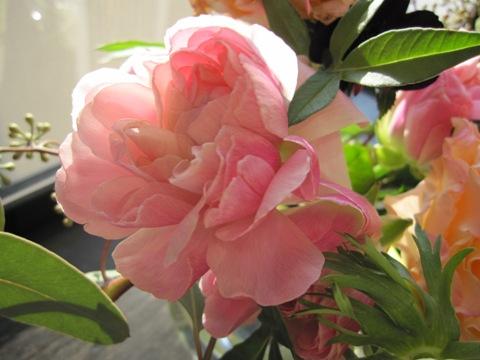 _flower5.jpg