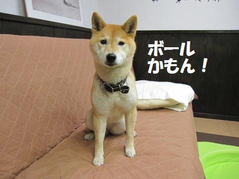 _nana19_20110222233539.jpg