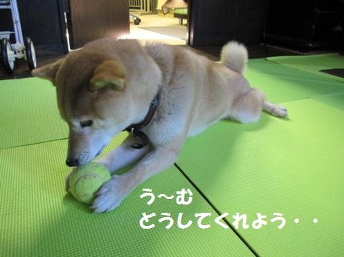 _nanachan2.jpg