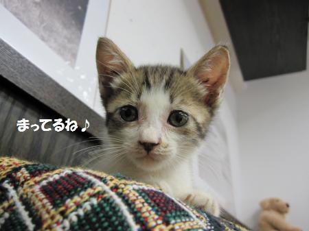 chibi5_convert_20100806221231.jpg