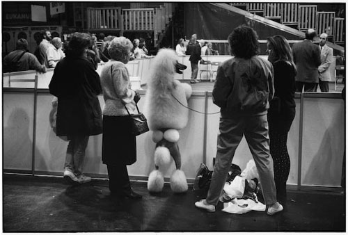 elliott_erwitt_photo_dog_show_birmingham_1991.jpg