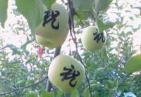 りんご文字入り3