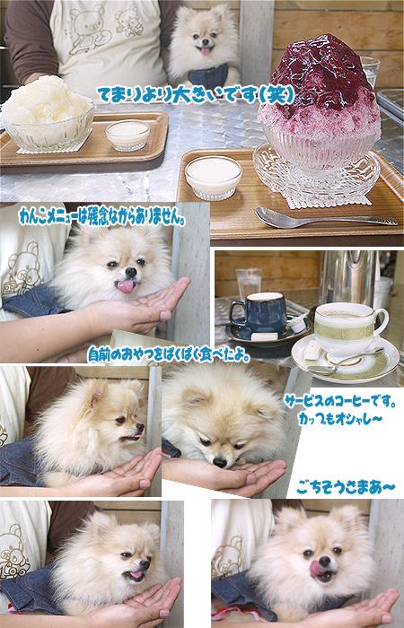 2009/10/3 埜庵3