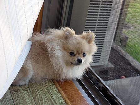 2009/10/8 自宅窓辺