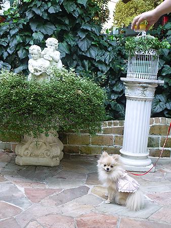 2009/10/10 Garden Cafe Raphael てまり4