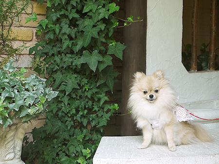 2009/10/10 Garden Cafe Raphael てまり5