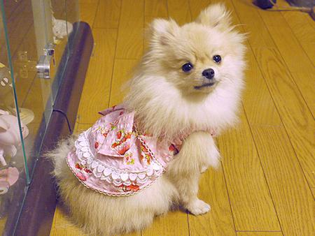 2009/10/10 にこちゃんワンピース