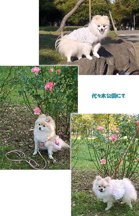 2009/10/10 代々木公園3