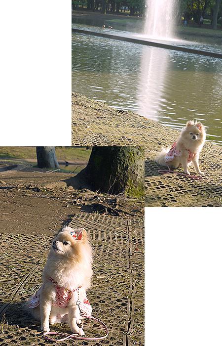 2009/10/10 代々木公園4
