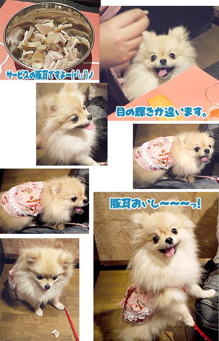 2009/10/11 豚食堂~Butalian2