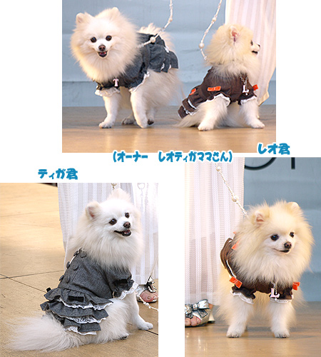 2009/10/12 arness Dog Autumn&WinterCollection 2009 ショー3
