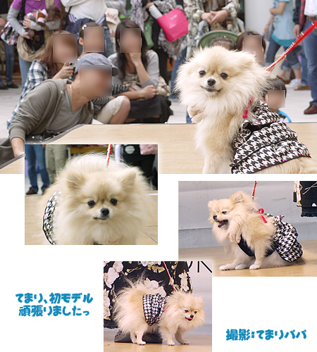 2009/10/12 arness Dog Autumn&WinterCollection 2009 その2 てまり2