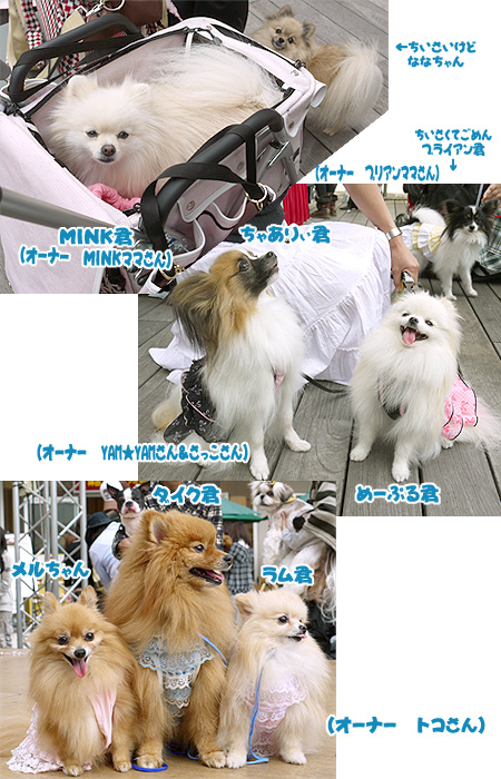2009/10/12 arness Dog Autumn&WinterCollection 2009 その2 2