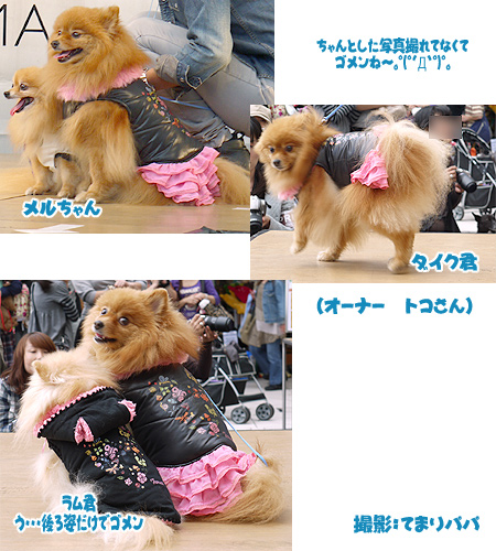 2009/10/12 arness Dog Autumn&WinterCollection 2009 その2 6