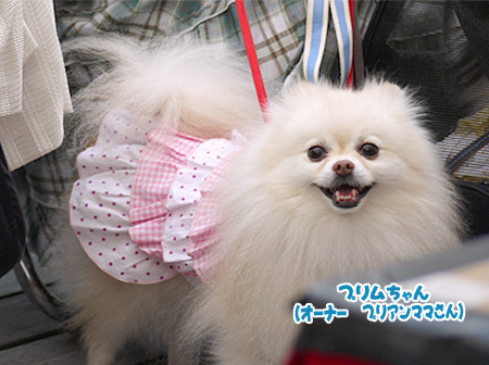 2009/10/12 arness Dog Autumn&WinterCollection 2009 その2 7