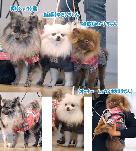 2009/10/12 arness Dog Autumn&WinterCollection 2009 その2 8