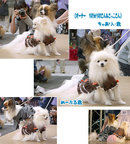 2009/10/12 arness Dog Autumn&WinterCollection 2009 その2 9