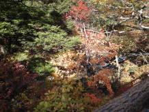 紅葉~2009.10 奥日光~