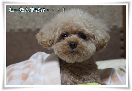 10-11-2_20101011014939.jpg
