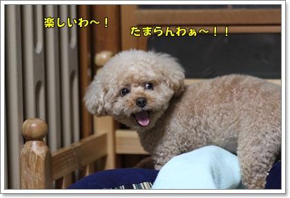 10-3-3_20101003021041.jpg