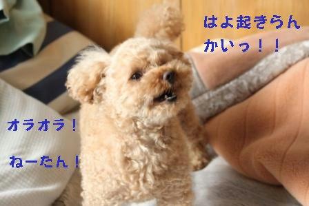 12-16-3_20091216003646.jpg
