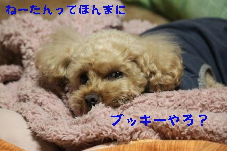 12-17-3_20091217014519.jpg