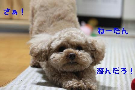 12-21-1_20091221012403.jpg