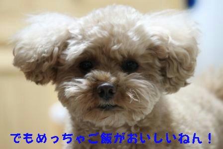 12-21-2_20091221012403.jpg