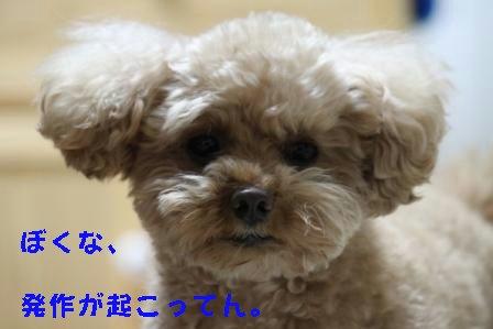 12-21-3_20091221012402.jpg