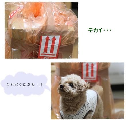 2-18-1_20110219005548.jpg