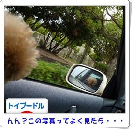 運転しながら撮ったんかいっ!!