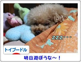 天使の寝顔♪
