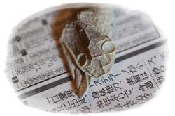 9-10-1_20100910013900.jpg